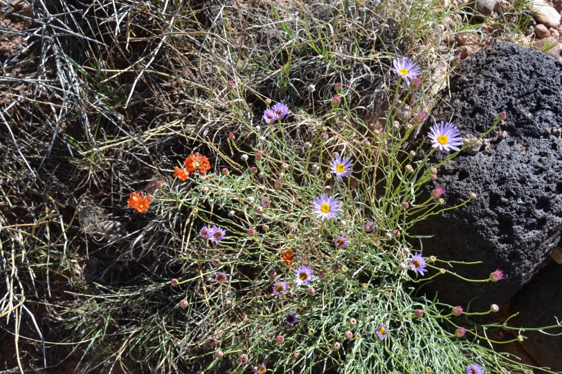 capitol-reef-national-park_27429582965_o